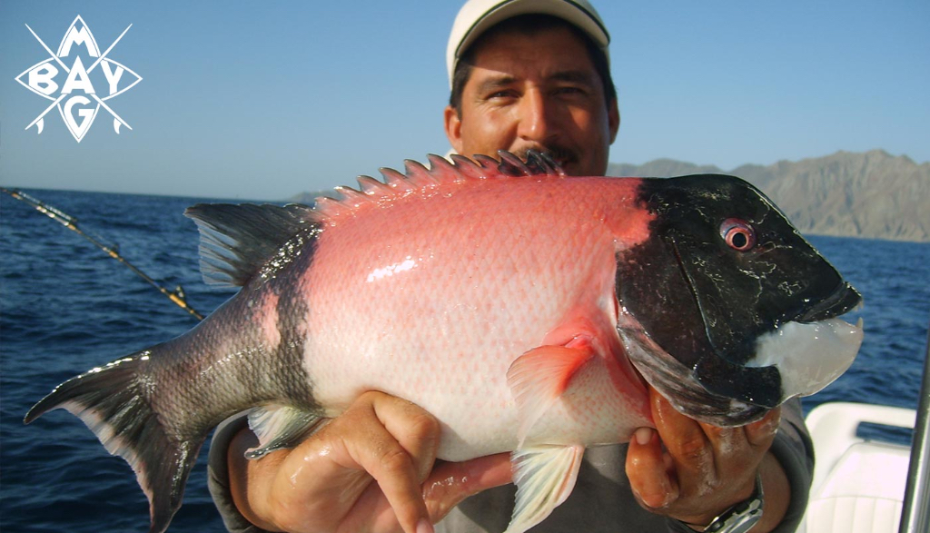 colorful small fish catch Mag Bay Mexico
