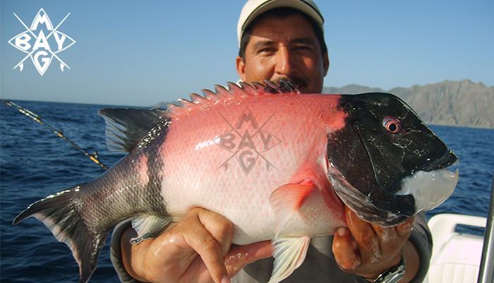 fish_inpage_slider_new_4
