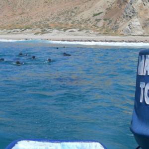 Seals from boat Mag Bay Mexico