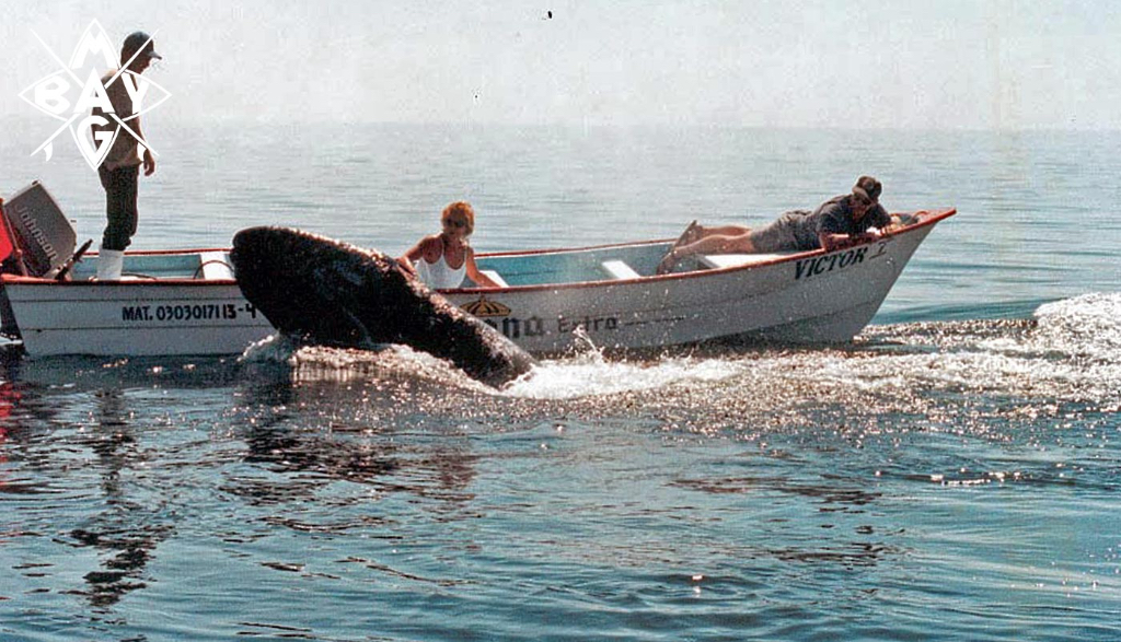 woman petting whale Mag Bay Mexico