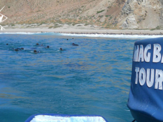 Seals from boat Mag Bay Mexico