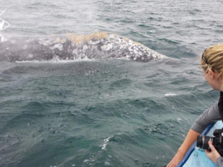whale hump and blowhole, Mag Bay Mexico