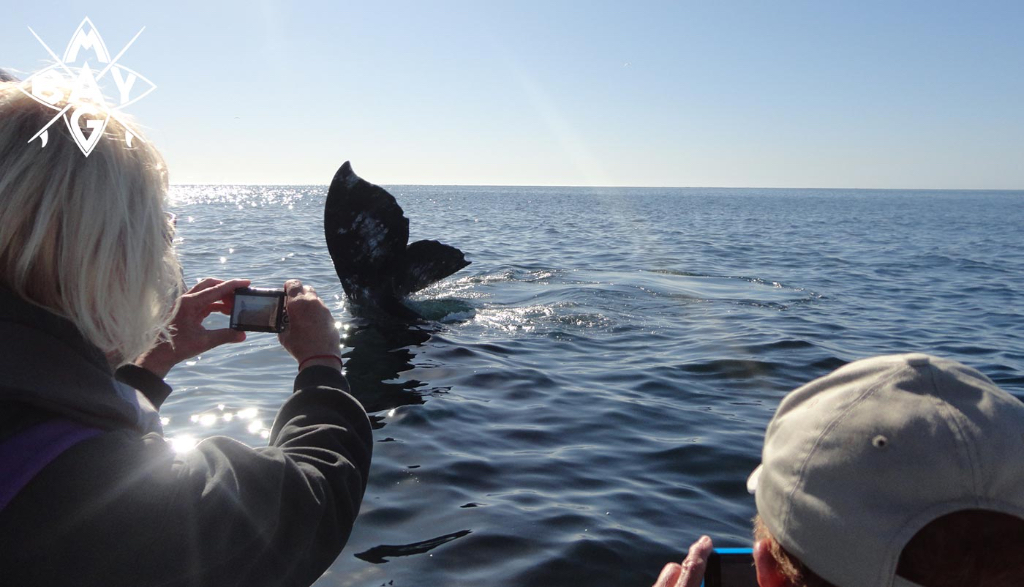 whale tail and camera, Mag Bay Mexico